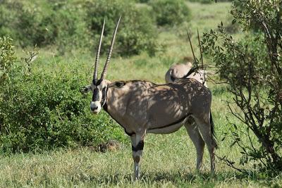 Samburu-02599.jpg