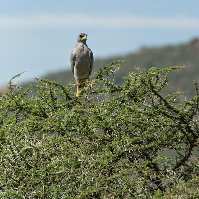 Samburu-02630.jpg