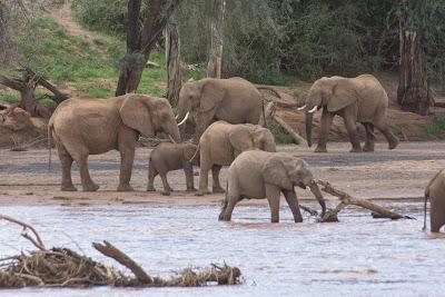 Samburu-02659.jpg