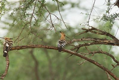 Samburu-02702.jpg