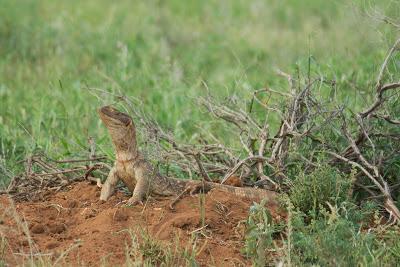 Samburu-02740.jpg