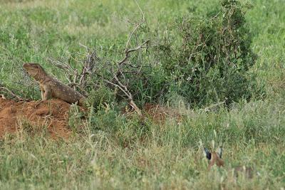 Samburu-02743.jpg