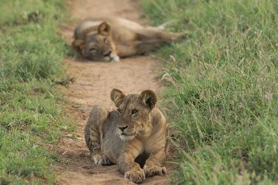 Samburu-02762.jpg