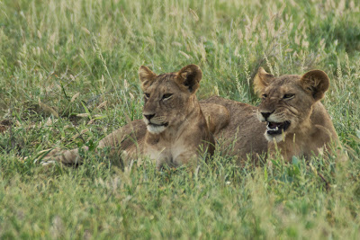 Samburu-02777.jpg