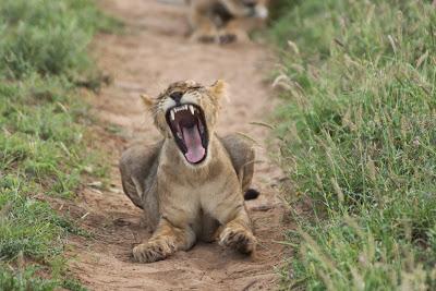 Samburu-02791.jpg