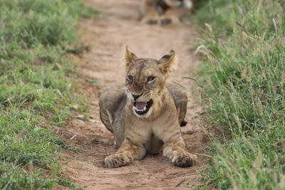 Samburu-02792.jpg