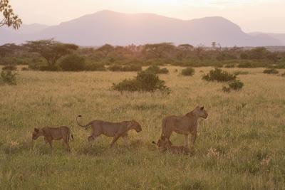 Samburu-02804.jpg