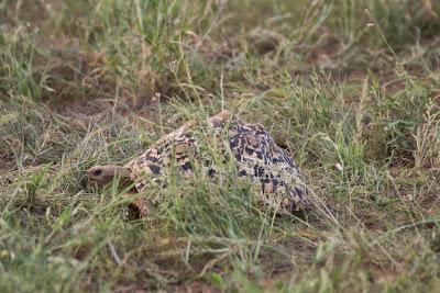 Samburu-02805.jpg
