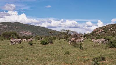 Samburu-1010195.jpg