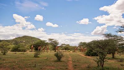 Samburu-1010213.jpg