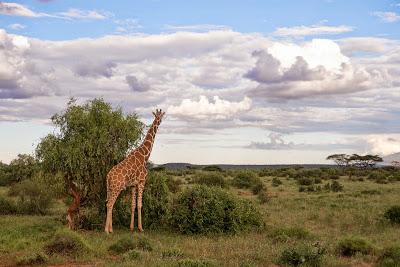 Samburu-1010228.jpg