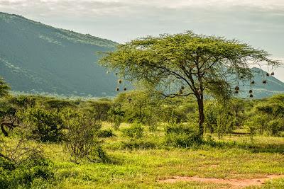 Samburu-1120467.jpg