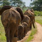 Polonäse Blankenese auf afrikanische Art