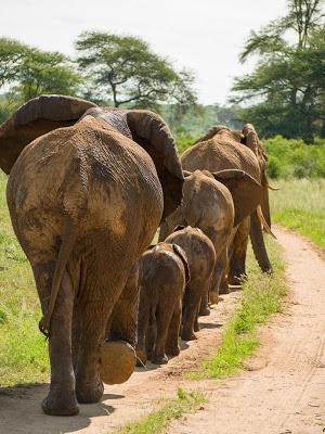 Samburu-1120494.jpg