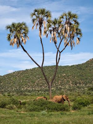 Samburu-1120499.jpg