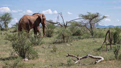 Samburu-1120509.jpg