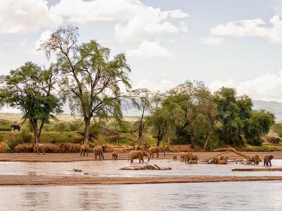 Samburu-1120535.jpg