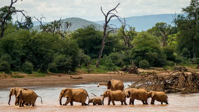 Samburu-1120545.jpg
