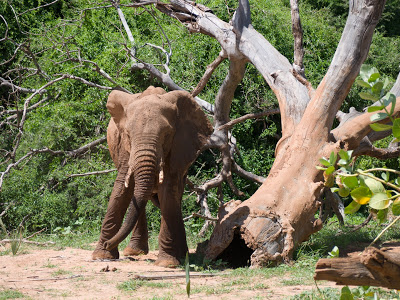 Samburu-1120553.jpg
