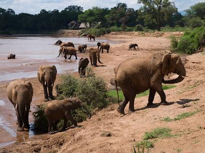 Samburu-1120554.jpg