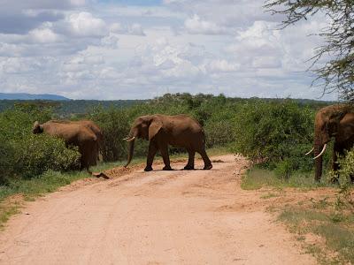 Samburu-1120569.jpg