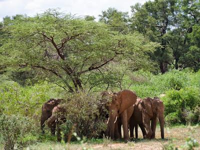 Samburu-1120572.jpg