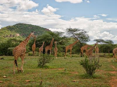 Samburu-1120573.jpg