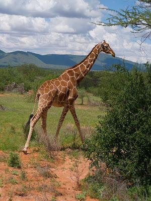 Samburu-1120579.jpg