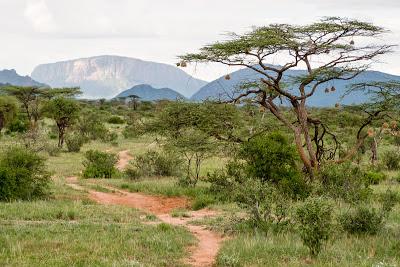 Samburu-1120601.jpg