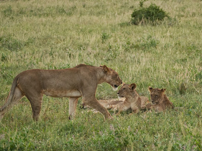 Samburu-1120626.jpg
