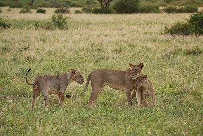Samburu-1120628.jpg