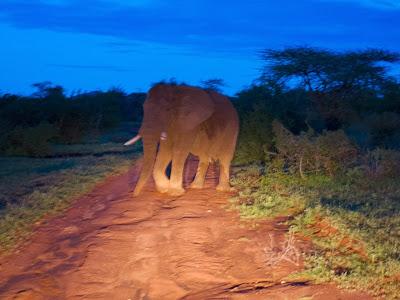 Samburu-1120638.jpg