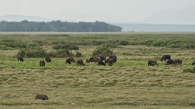 Amboseli-03279.jpg