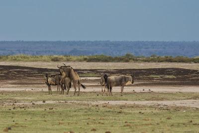 Amboseli-03284.jpg