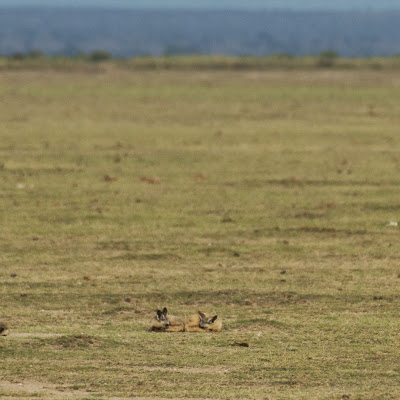 Amboseli-03288.jpg