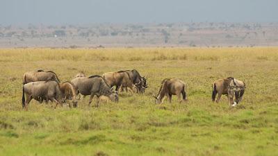 Amboseli-03314.jpg