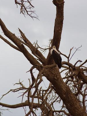 Amboseli-03320.jpg
