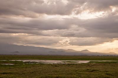 Amboseli-1010364.jpg