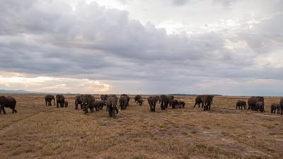 Amboseli-1010365.jpg