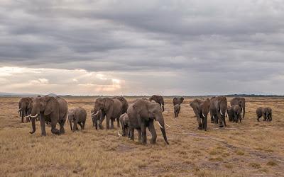 Amboseli-1010366.jpg