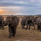 Reisebericht Kenia 2014 – Teil 6: Auf dem Highway to Hell nach Amboseli