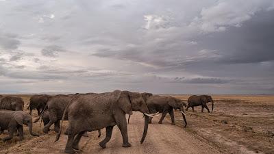 Amboseli-1010370.jpg