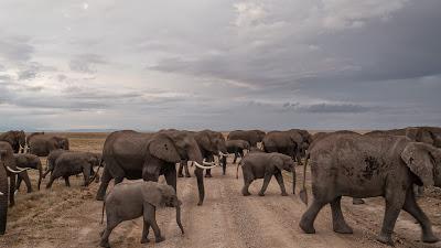 Amboseli-1010372.jpg