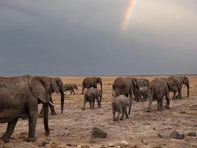 Amboseli-1010374.jpg
