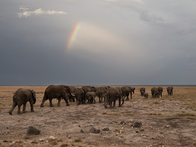 Amboseli-1010377.jpg