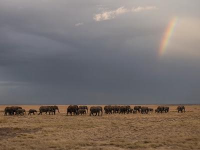 Amboseli-1010382.jpg