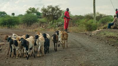 Amboseli-1120881.jpg