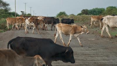 Amboseli-1120883.jpg