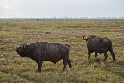 Amboseli-1120890.jpg