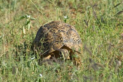 Samburu-Sweetwater-02819.jpg